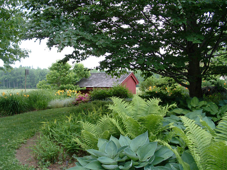 A lovely shade garden under the shade of trees filled with hostas and ferns.