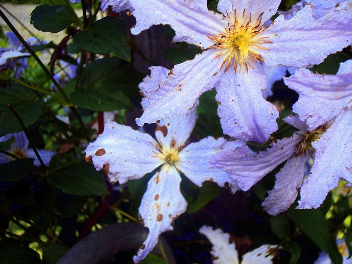 q what s eating my flowers and what can i do about it, flowers, gardening, pest control