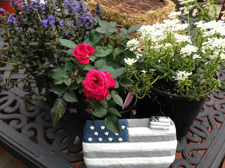 red white and blue patriotic plantings with heart, container gardening, flowers, gardening, perennials