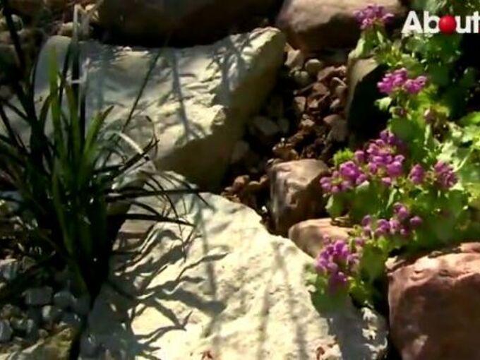video key points to keep in mind when designing a rock garden, gardening