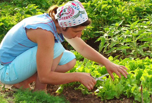 get inspired six reasons to do yard work, gardening