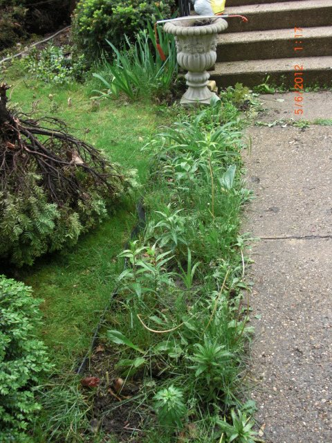The front walkway looked horrible with all the weeds.