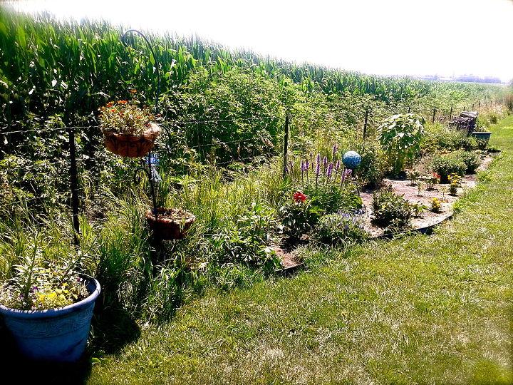 Whole garden!