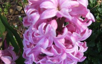 """March"" in the garden! Helpful tips on what to do now to get your landscape ready for spring."