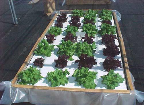 homeowner hydroponics, gardening
