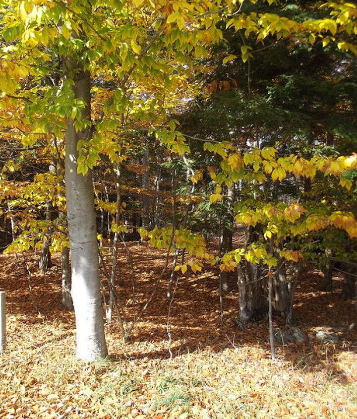 more michigan barns, outdoor living