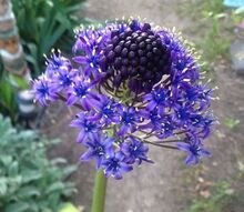 what is the name of this flower, flowers, gardening