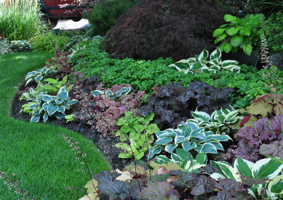 This homeowner has mixed different colored heuchera and hostas in a way that I haven't quite seen before.   Though there isn't that much in flower, it is still colorful.