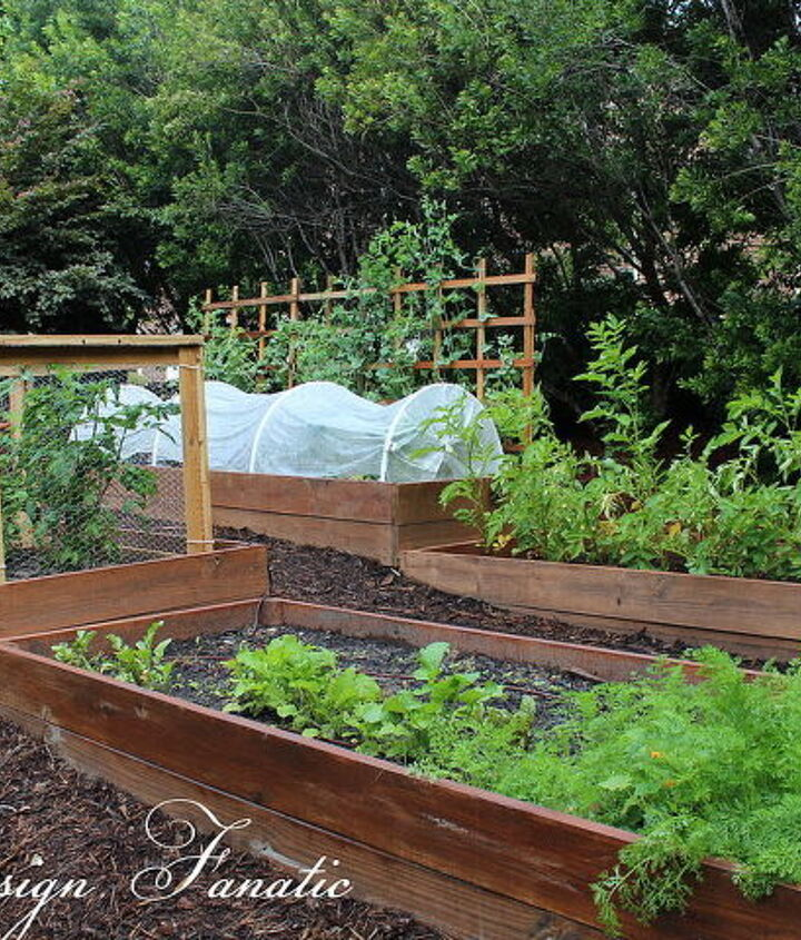 We built 4 raised beds in our North garden this year.