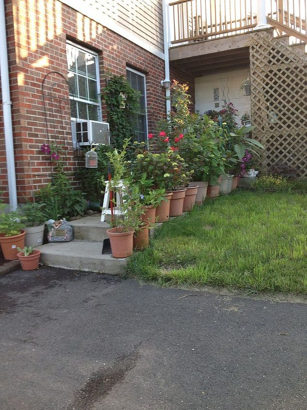 My Potted Plants on the walkway