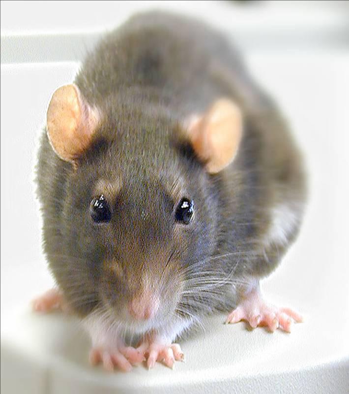 You dirty rat!!!