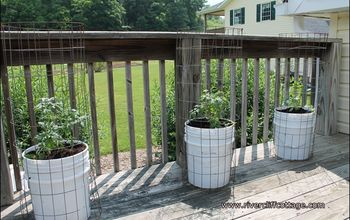 Growing Tomatoes in Five Gallon Buckets