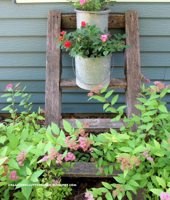 An old tree house ladder picked up for free adds vertical interest to my minnow bucket plant containers.