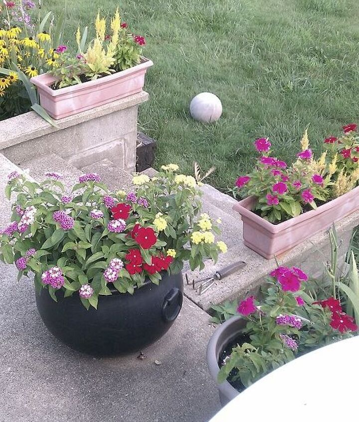 Potted flowers last year 2011