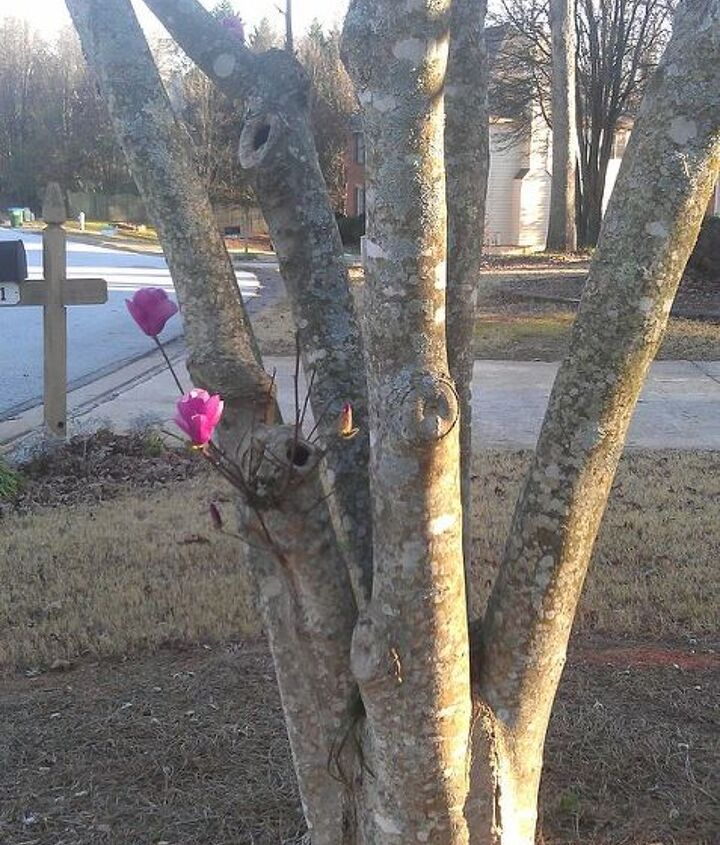 Here you can see the trunk better and some flowers are growing from here so I can get a closer pic