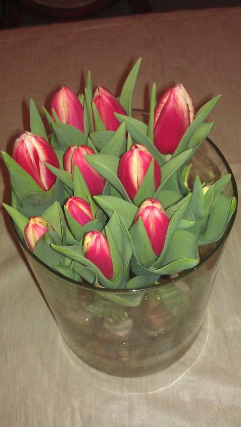 indoor tulips!  It's my sunshine on a cloudy day!