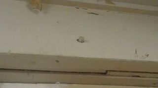 i have a 3 4 foot section 2 each 2x10s wide of top plate that has been deteriorated