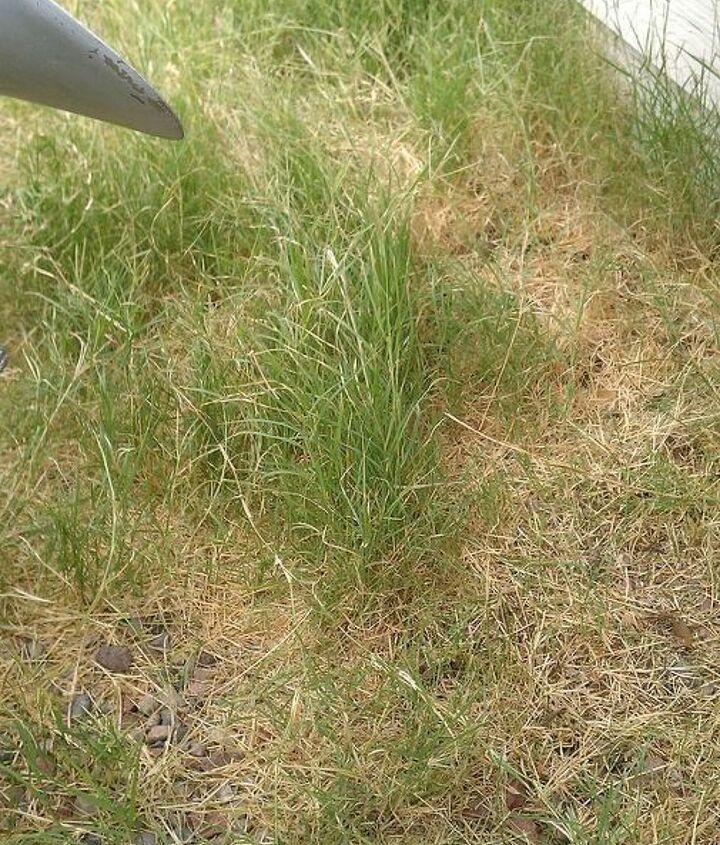 wild weeds growing all over