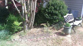 ground cover suggestion, gardening, landscape, Side yard view 1 hard slope yuck partial sun Sits under a maple tree crape myrtle and a japanese maple Bed stops in front of tall shrubs at back side