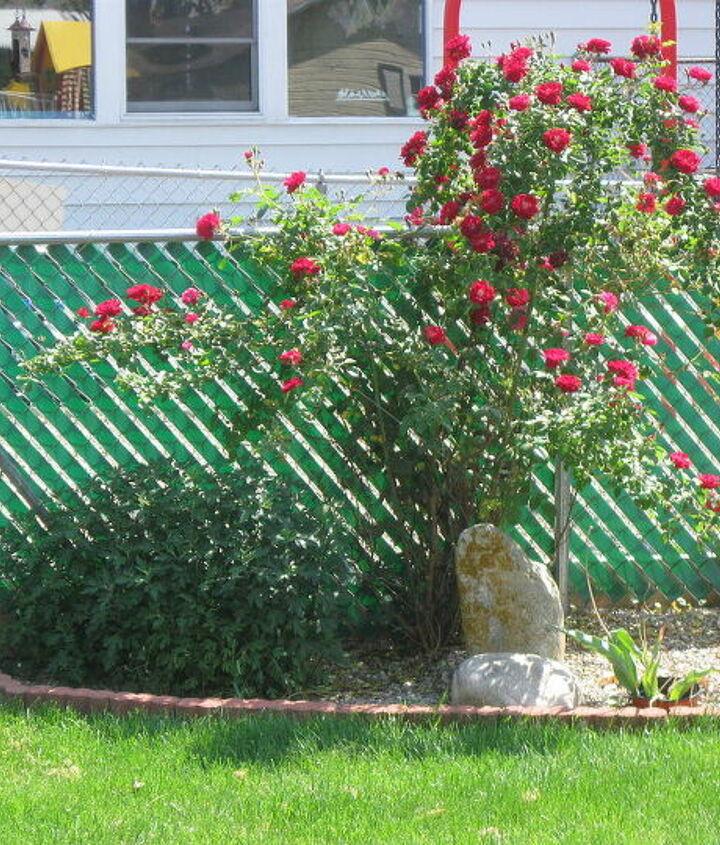 Our back corner of yard , beginning