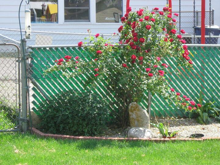 my new back corner, gardening, Our back corner of yard beginning
