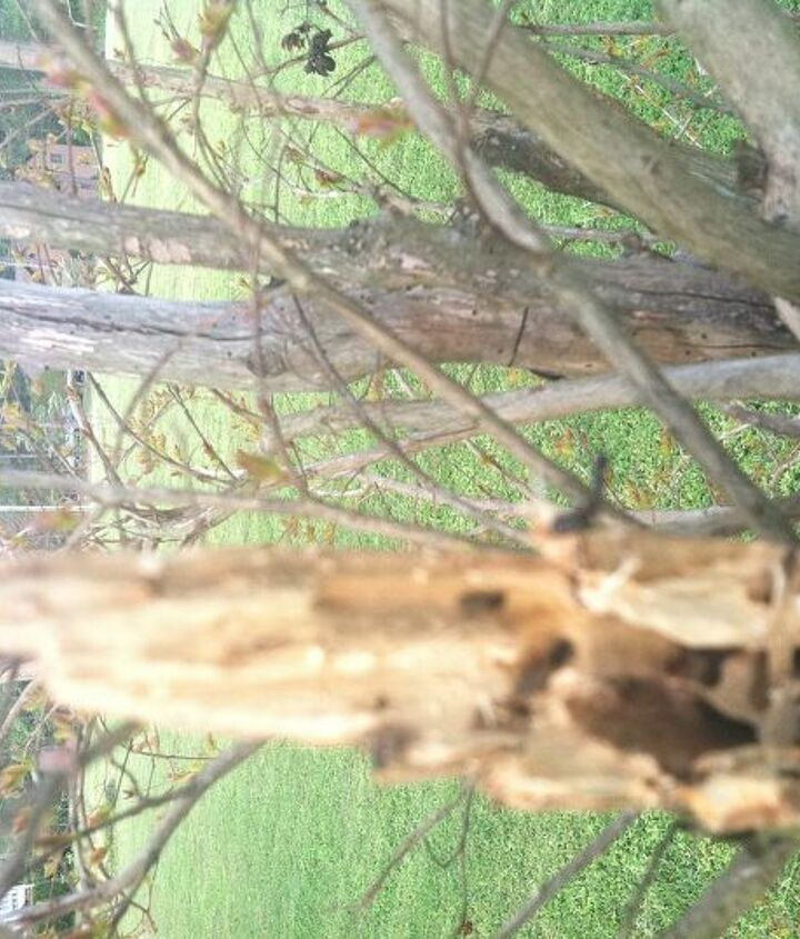 one of the broken branches
