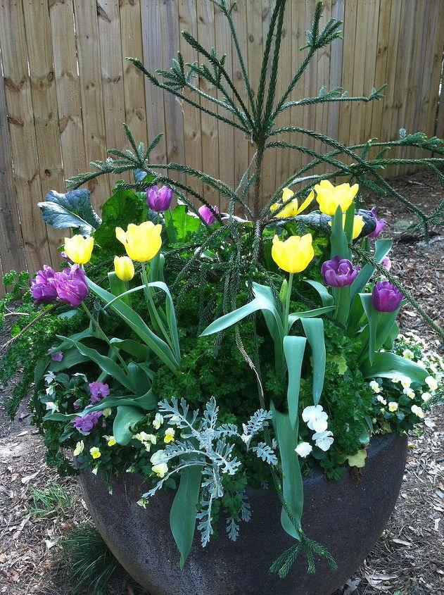 spring container, container gardening, gardening