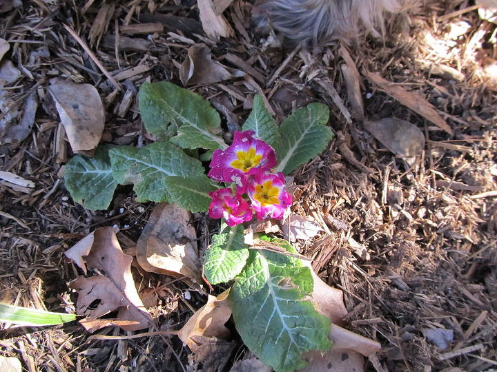 Unidentified flower blooming in January!