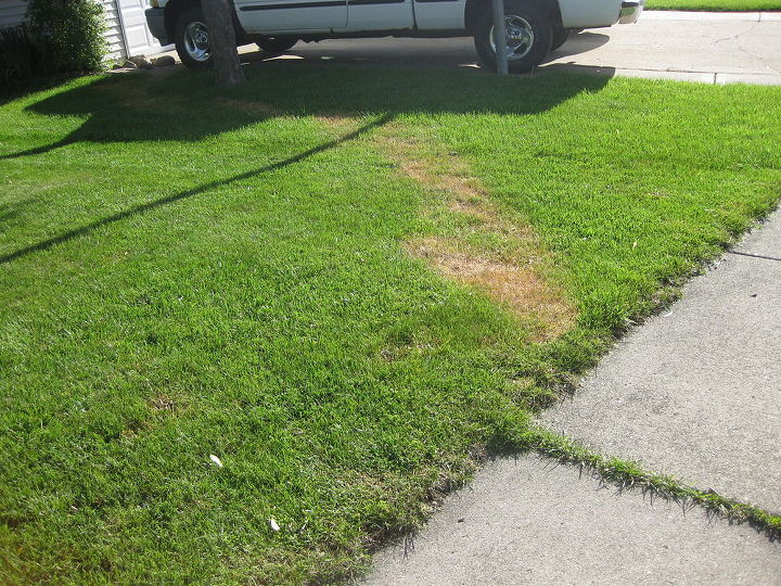 q trail of dead grass mystery, gardening, landscape, Trail of dead grass from house to street
