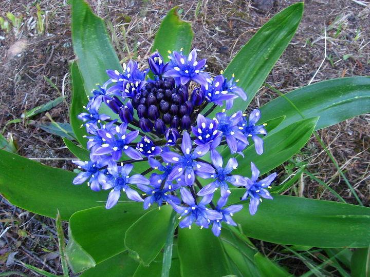it is blooming, flowers, gardening