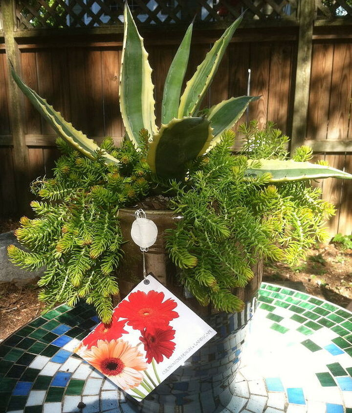 container with water savvy plants we made for a client, container gardening, gardening