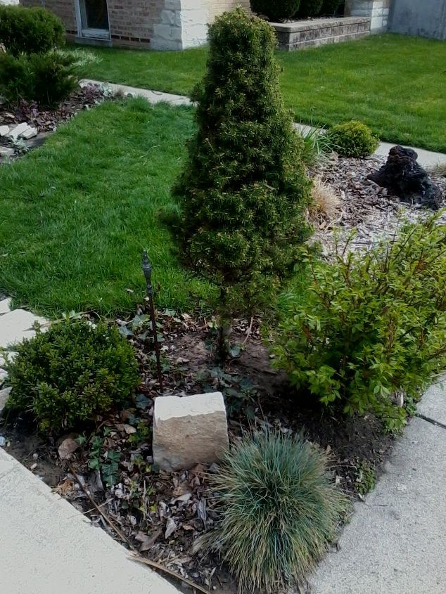 this is my do it yourself project in front of my home how can i maximize the growth, gardening, English Ivy