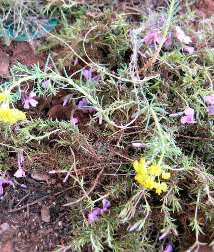 q weed or flower, flowers, gardening