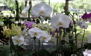 orchids green house, gardening, outdoor living