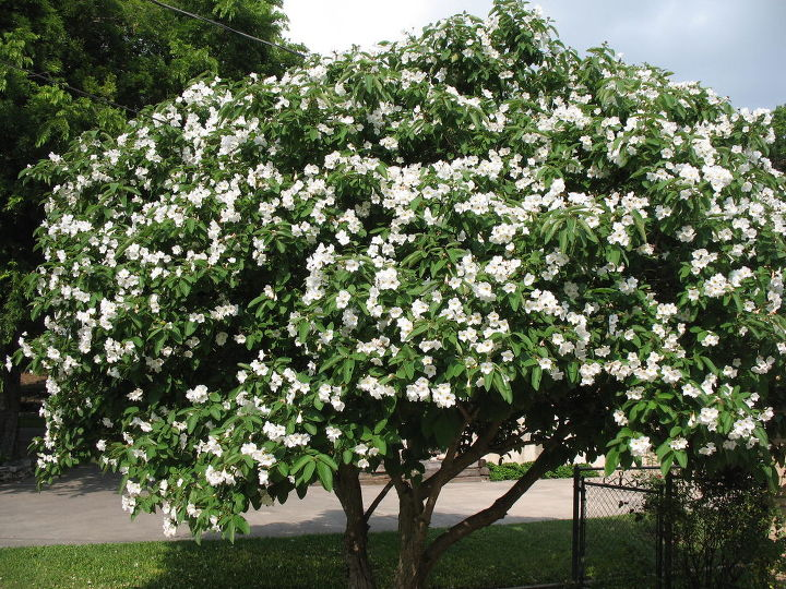 What types of plants and trees grow well in arizona in - Flowers that grow on tree trunks ...