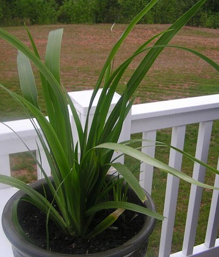 q a question about a plant, gardening