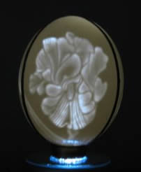 Iris. This is my night lamp. It sits on a rotating pedestal with light. This eggshell is carved  from the inside. when the light is off it looks like a normal Ostrich egg, The image shows only when lit.