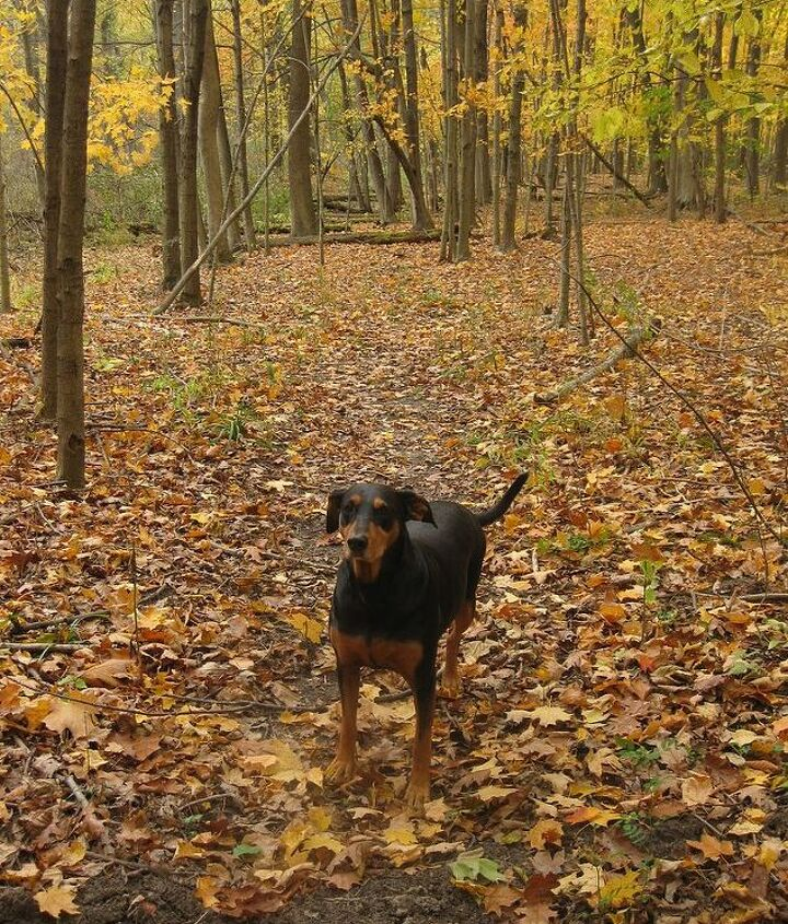 Oh look, there is my hiking buddy Daisy. She's always ready to go on a walk!