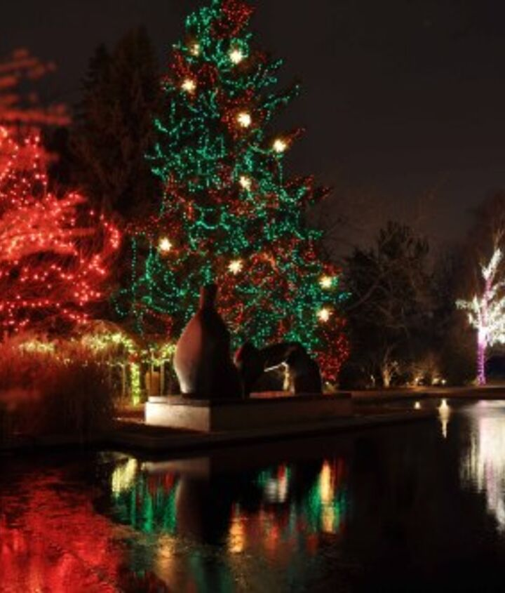 """The former """"blue tree"""" at the Denver Botanic gardens dressed in red and green"""