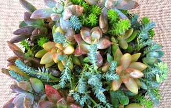 diy succulent dish garden repurpose, crafts, flowers, gardening, succulents
