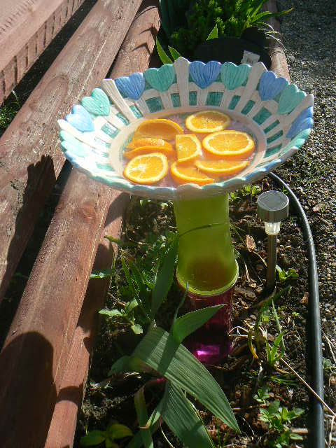 The butterfly bath. Oranges are suppose to attrack them will see.