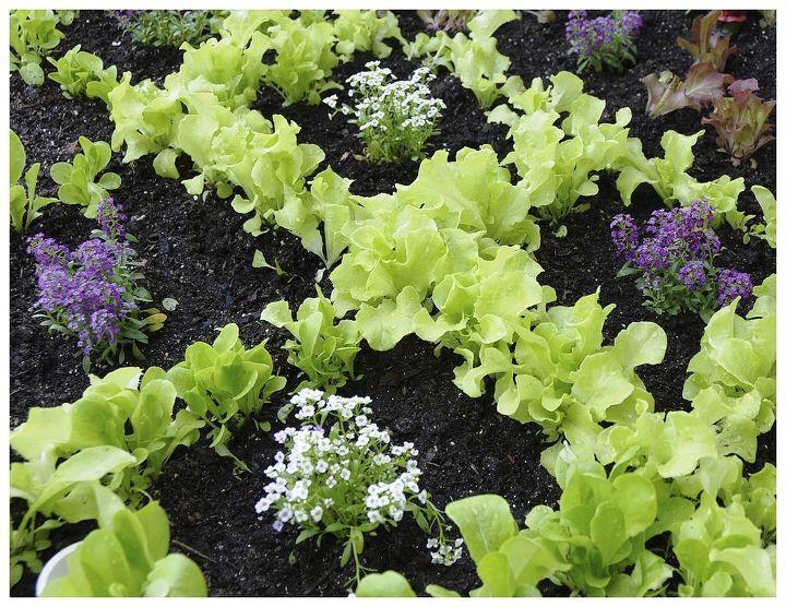 Garden Stamped lettuce pattern with Sweet Alyssum