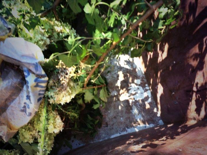 hydrangea cuttings, flowers, gardening, hydrangea, Dumpster Diving to save Beautiful Plants