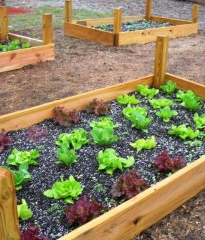 Raised bed planted with a variety of lettuces