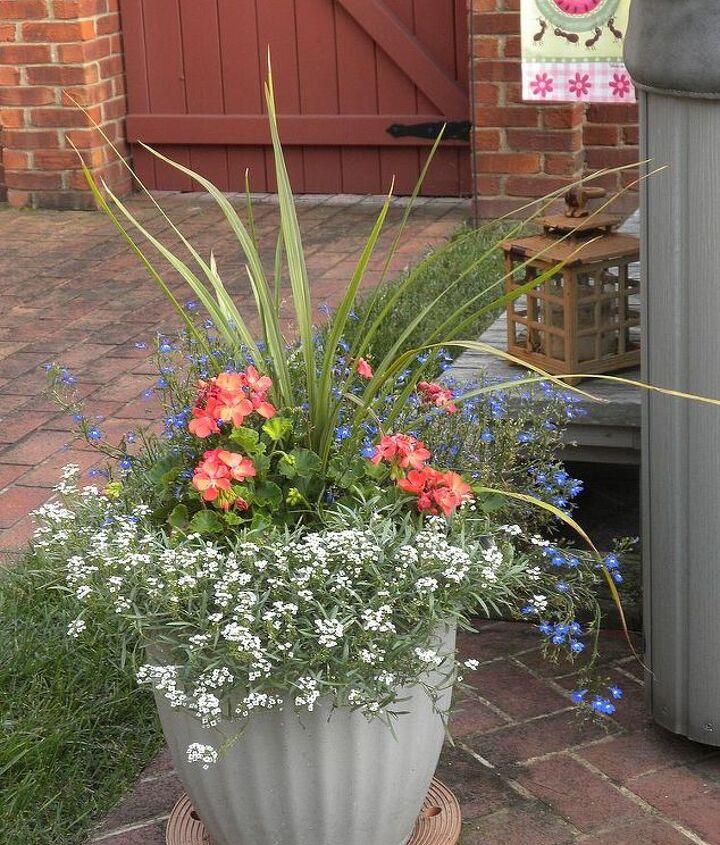Containers: Geranium, Alyssum, Lobelia, Dracena
