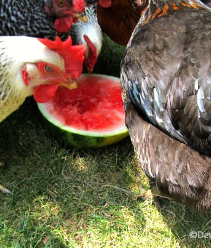 The ladies love cool sweet watermelon on hot days.