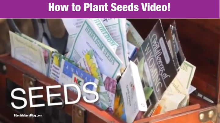 how to start seeds to save money on plants for your garden gardening tips, gardening