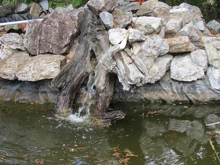 q koi pond care, outdoor living, ponds water features