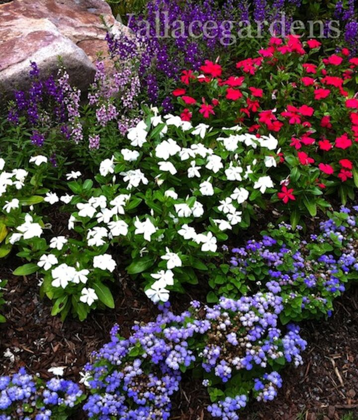 This flowerbed was created with red and white vinca, and some blue ageratum for a 4th of July party.