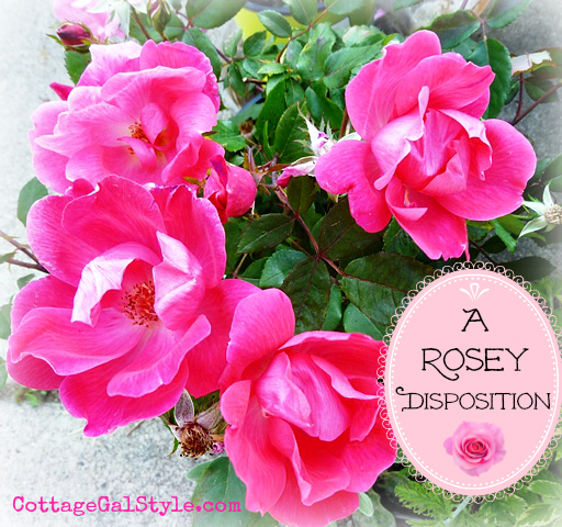 a rosy disposition knockout roses that is, flowers, gardening, hydrangea